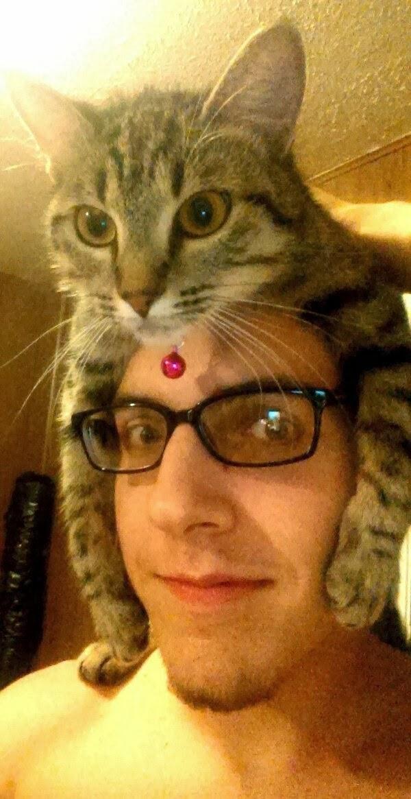 Funny cats - part 71 (35 pics + 10 gifs), funny cat pics, cat photos, cute cat pics, cute cats