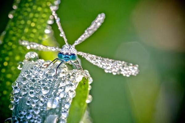 صور حشرات مغطاة بقطرات الندى .. سبحان الله. E8cac2efd60341c27ef93e3ab4a3adca%2B(1)