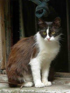 Mačka životinje download besplatne pozadine slike za mobitele