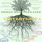 Más bosque mediterráneo