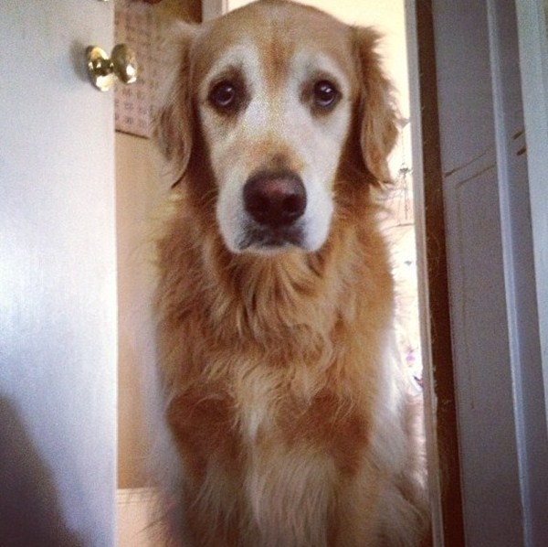 sad dog, funny animal pictures, animal photos, funny animals