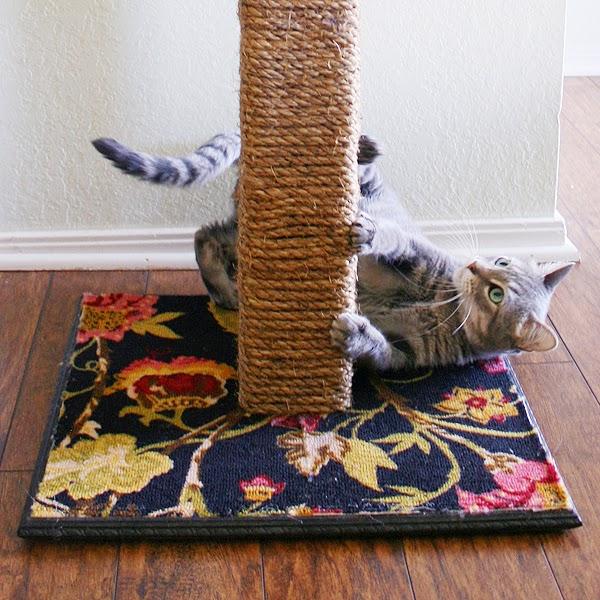 Как сделать когтедралку для кошки