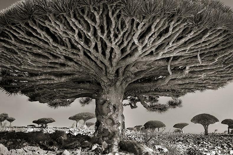 Fotógrafo pasa 14 años de su vida documentando los árboles más antiguos del mundo