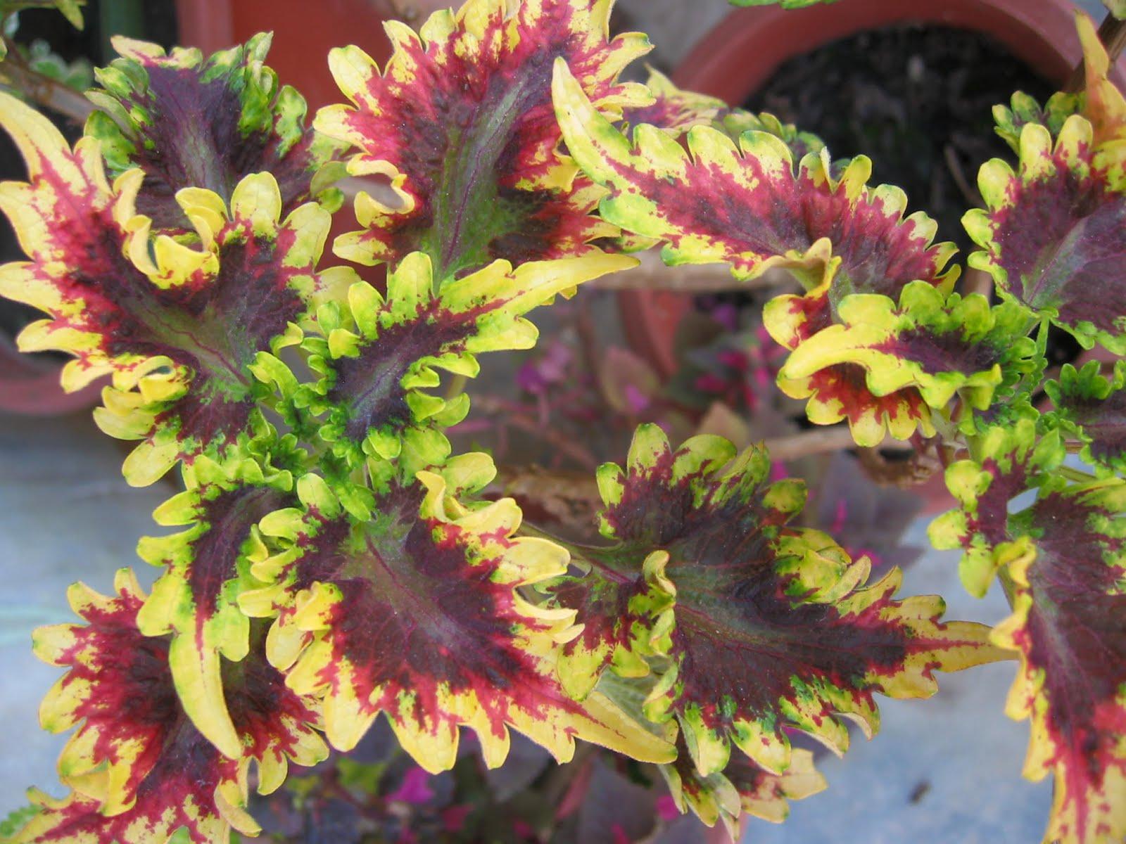 pembelajaran sains tumbuhan melalui internet ciri 7