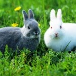 Tips on Keeping animals Rabbit - Rabbit Development Phase