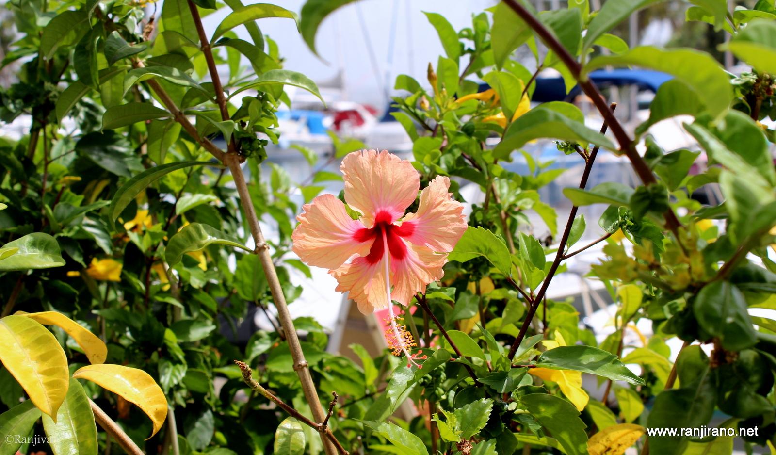 L 39 le aux fleurs et ses magnifiques oiseaux colibris for Fleurs et fleurs