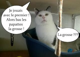 Petite insulte entre chats !