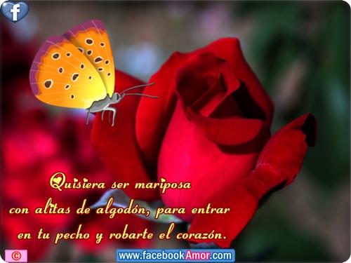 Rosas Rojas De Amor Con Frases