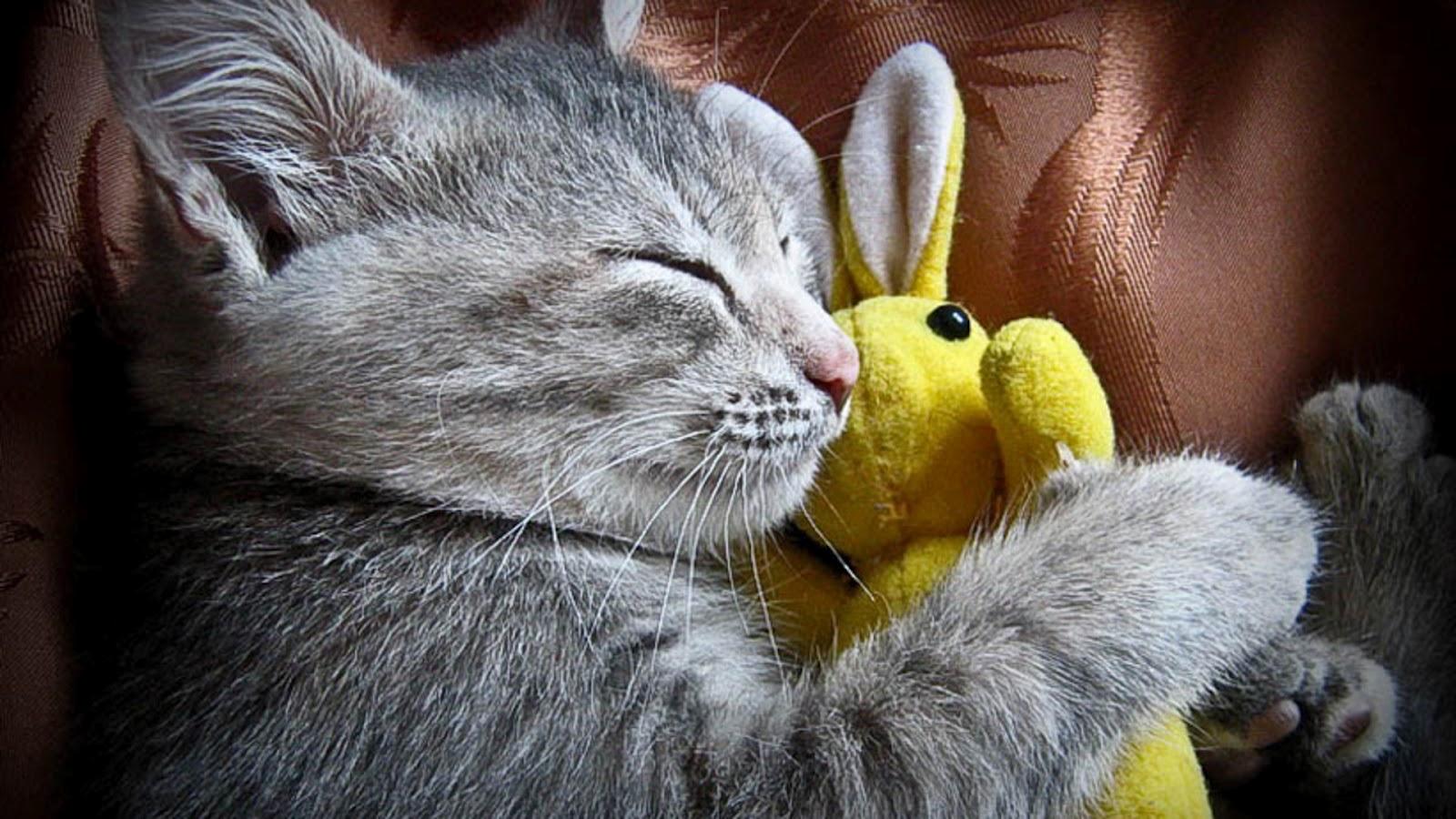 cute cats sleep wallpaper - photo #25
