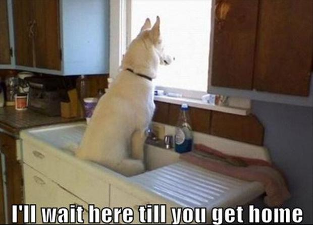 Funny I Ll Be Waiting Meme : The funniest animals i ll wait here till you get home