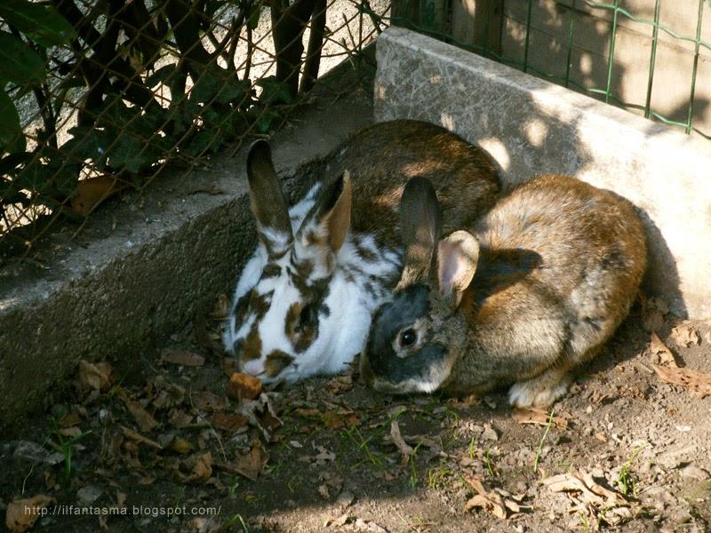 Le avventure della mia fantasia la storia del coniglio
