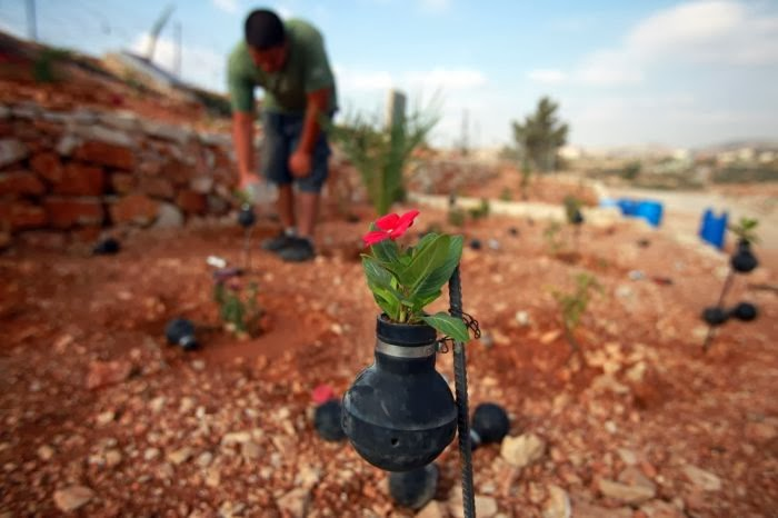 Residents of this Palestinian village have planted flowers in hundreds of spent Israeli tear gas grenades to honor those killed during their weekly protests against Israel's West Bank separation barrier.