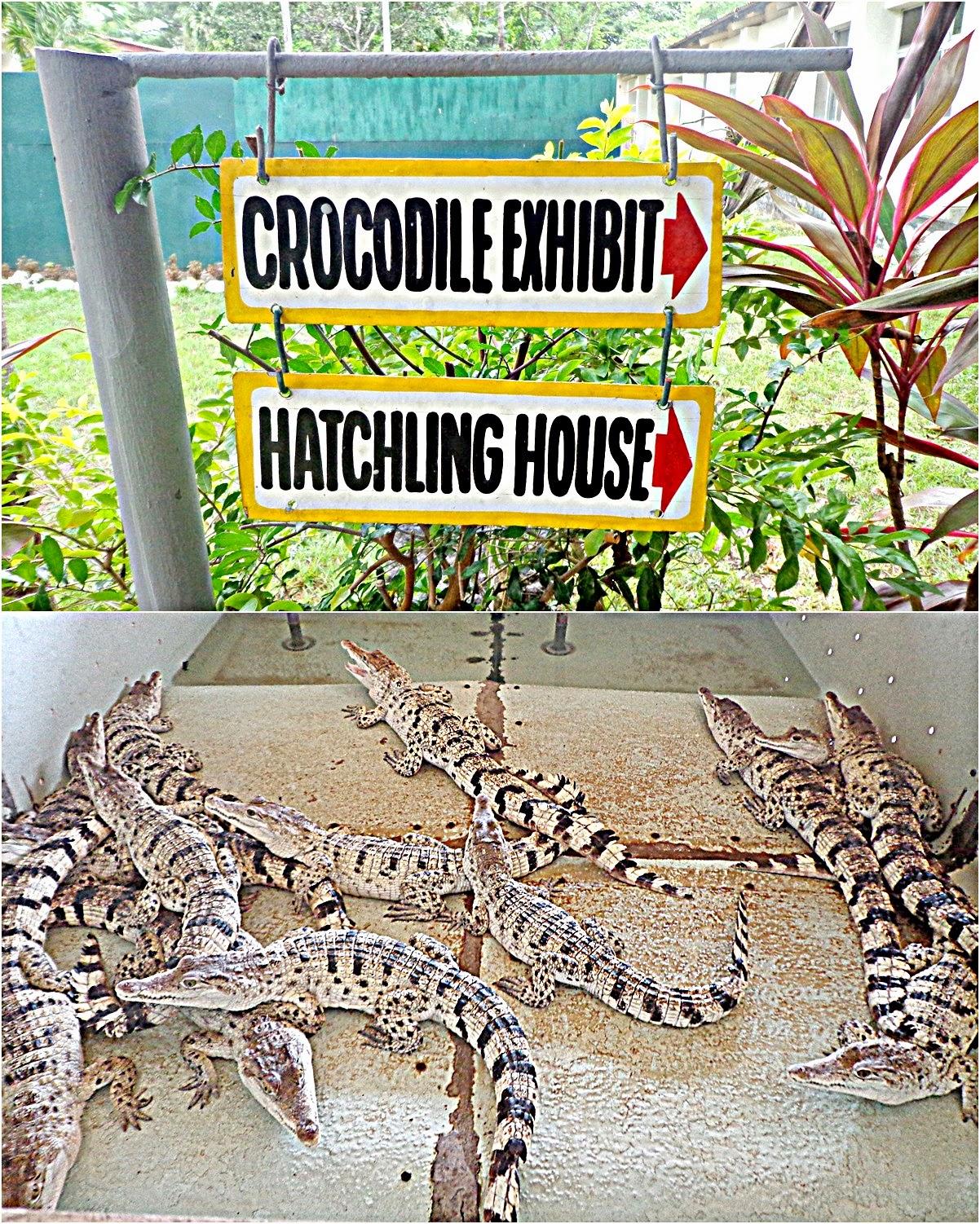 palawan crocodile farm, palawan wildlife rescue and conservation center