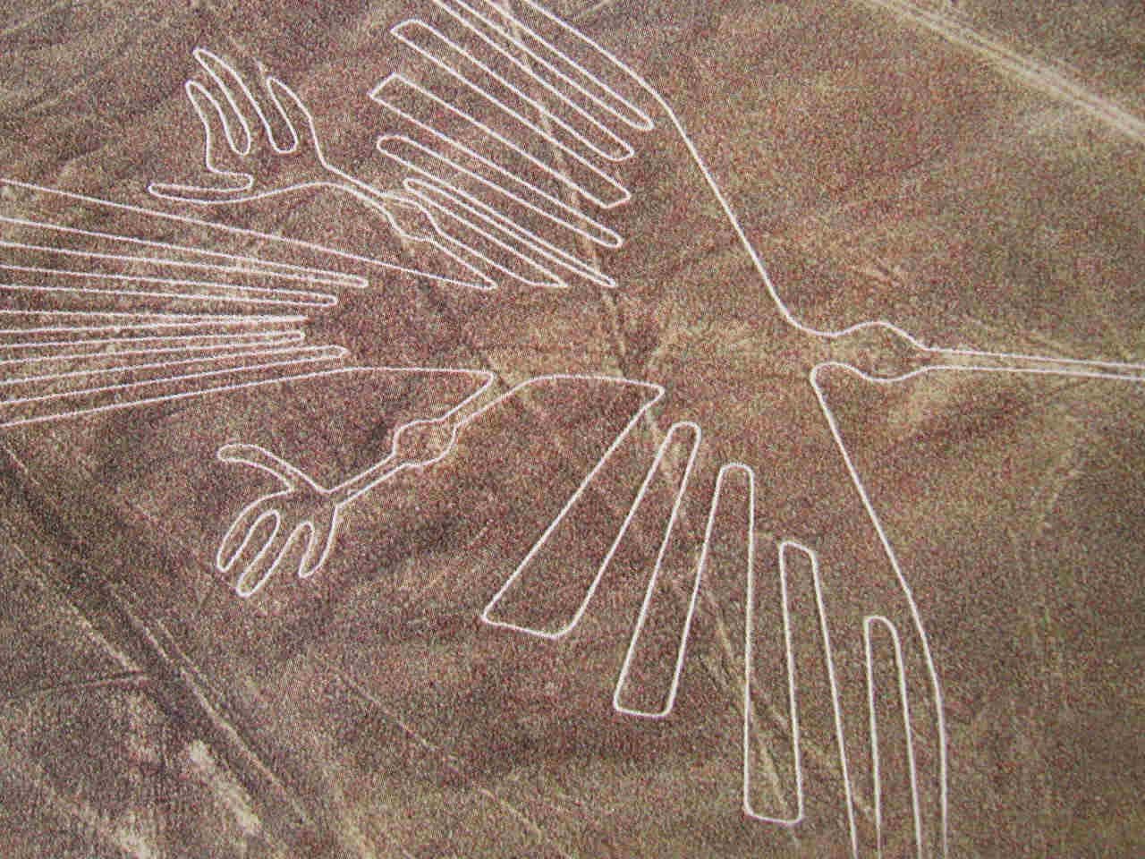 Lineas de Nazca, El colibrí.