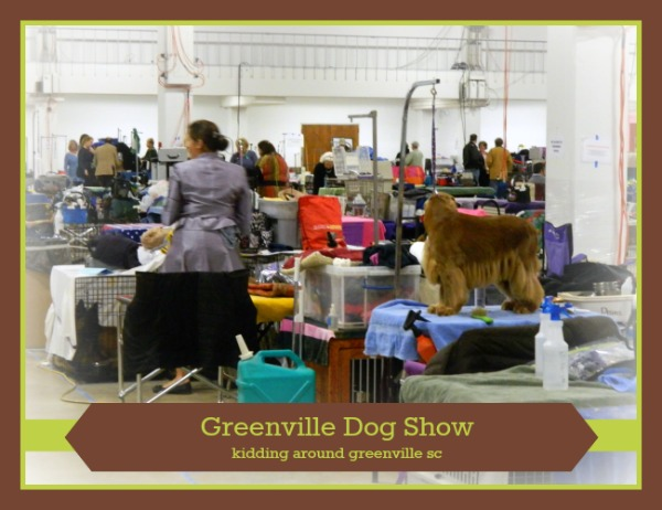 What to expect when visiting the dog show in Greenville SC?