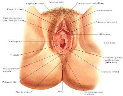 ww sexo cean com:
