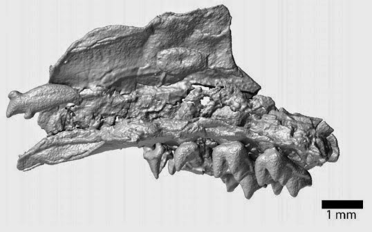 http://sciencythoughts.blogspot.co.uk/2014/10/mammal-remains-from-early-eocene-of_30.html