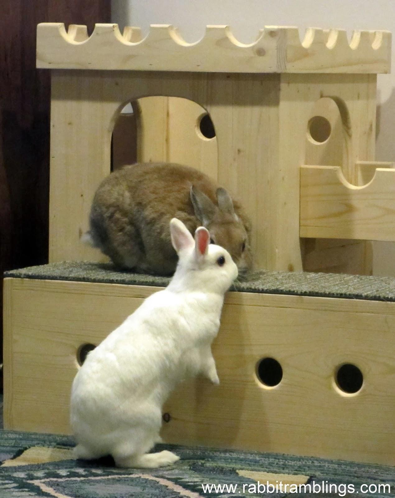 Rabbit Ramblings Little Miss Perpetual Motion Bunny Meets Bunya The Hutt