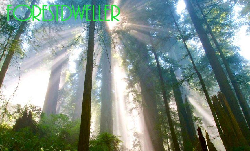 Forestdweller