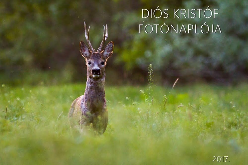 Diós Kristóf Fotónaplója