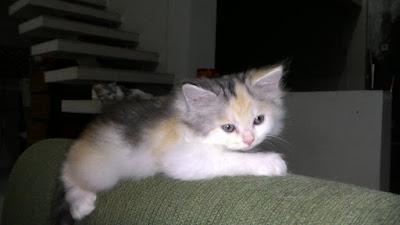 foto-kucing-imut_03