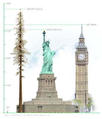 世界一 高い 木 高さ 比較 ヒュペリオン