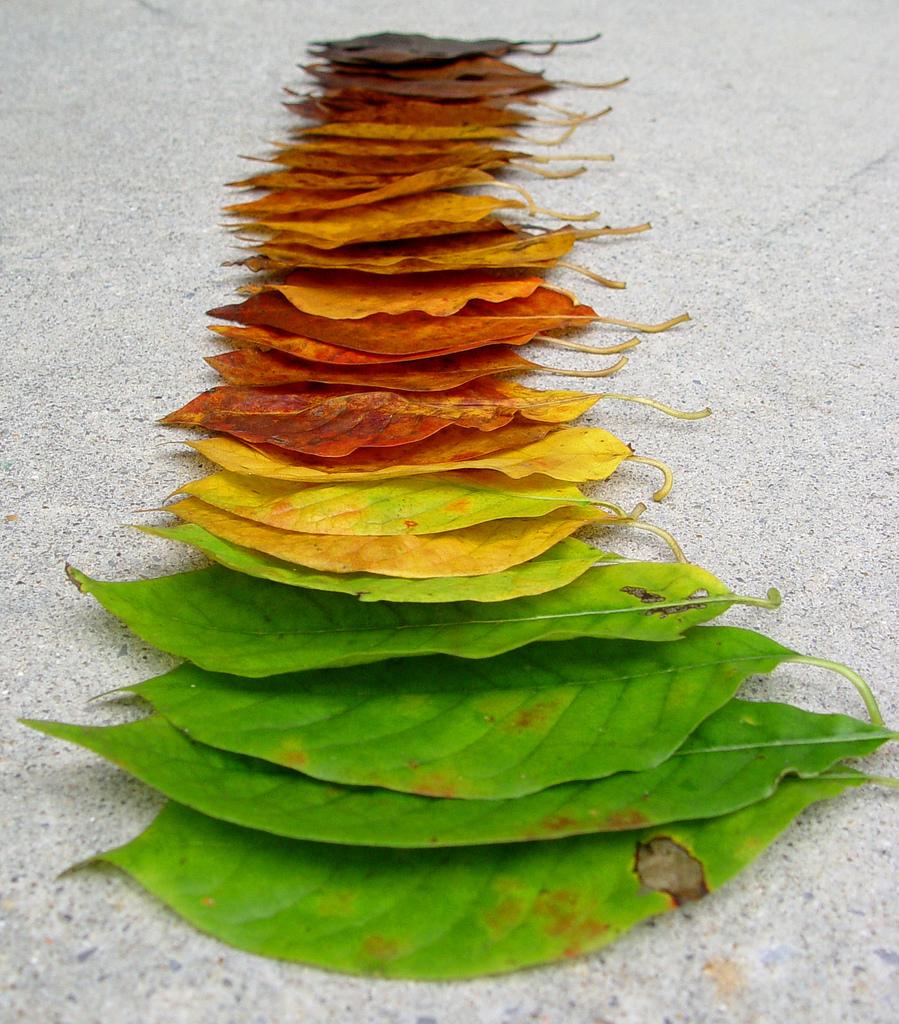 Sab as que de qu color son las hojas de los rboles - Color verde hoja ...