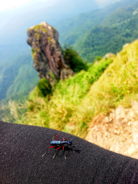 Bug's Life on Mt. Pico De Loro