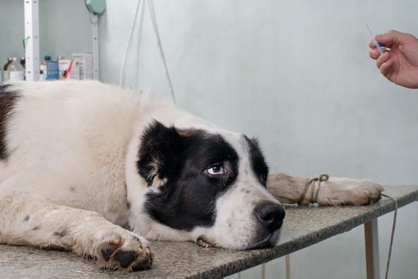 Собака пострадавшая от рук живодеров