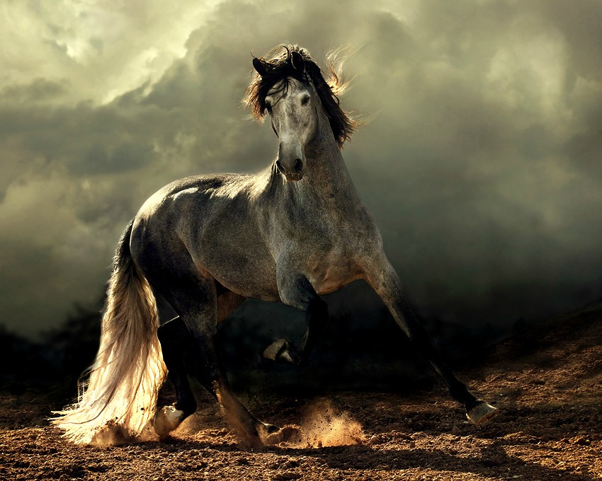 The gallery for beautiful horse photography for Beautiful horses