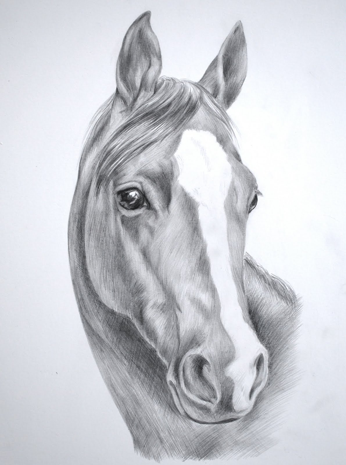 Black horse head drawing - photo#2