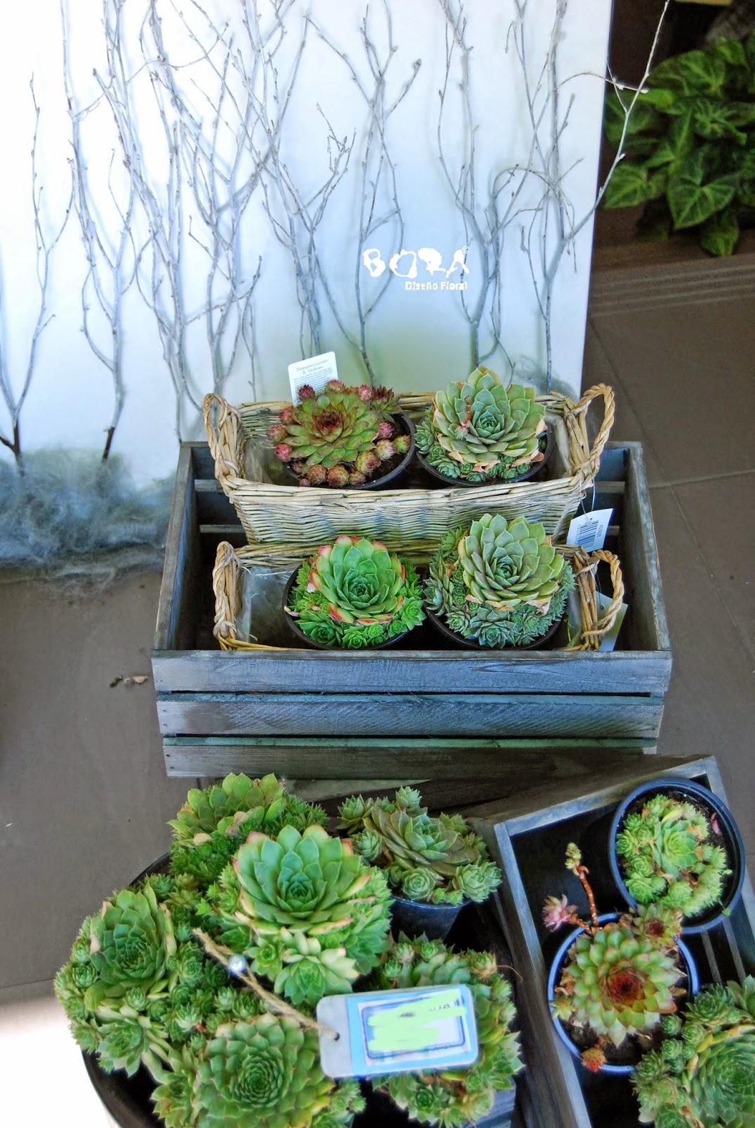 cajas de fruta con cactus