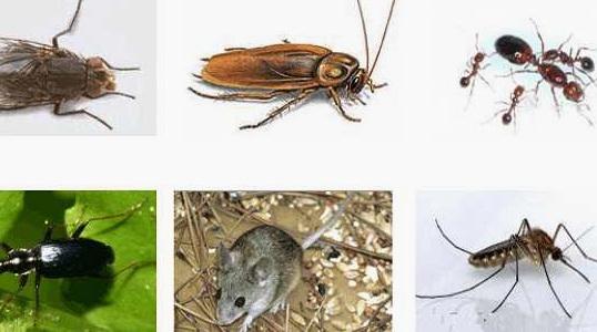 Cara Cerdas Untuk Mengusir Semut, Kecoa Dan Nyamuk