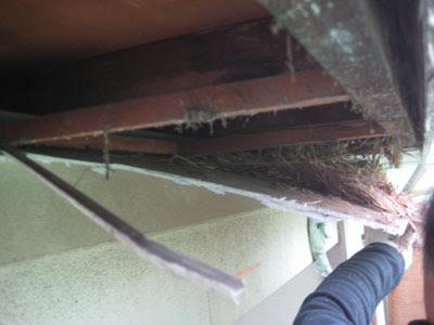 東京都府中市 屋根修理 軒天 破風板 雨樋 設置 工事 軒天解体 鳥の巣