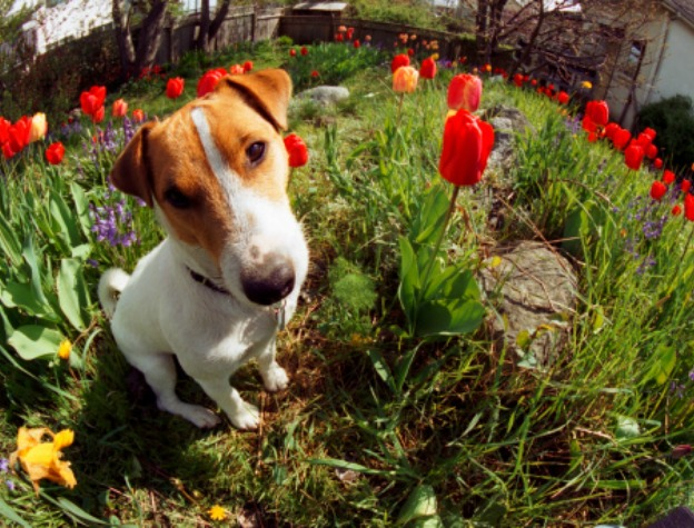 Eating Eden Our Blog PetToxic Plants – Garden Plants Toxic to Dogs