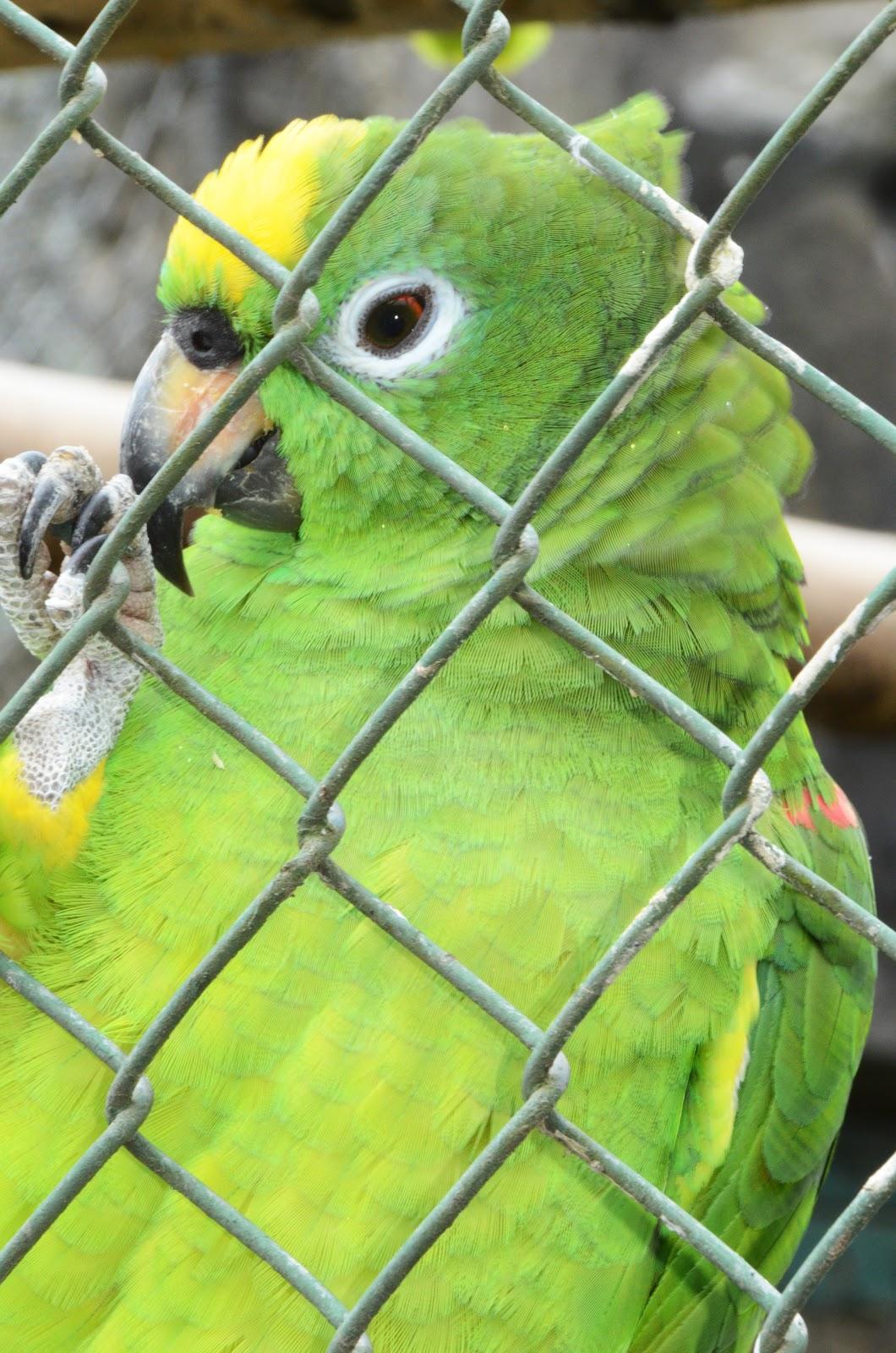 Imagenes De Baños Ambato:Fuente: http://wwwviajandoxcom/tungurahua/tung_banos_zoologicohtm