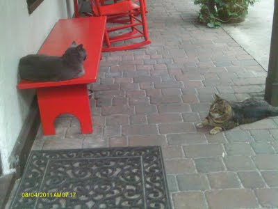 Who Forgot to Buy Cat Food? 3  7 27 11%2B048 St. Francis Inn St. Augustine Bed and Breakfast