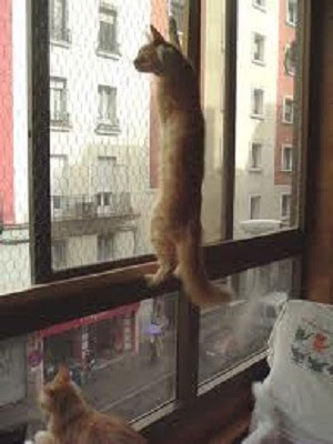 Soy un gato protege a tu gato de una ca da - Gallineros leroy merlin ...