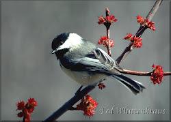 """""""...a little birdie told me..."""""""