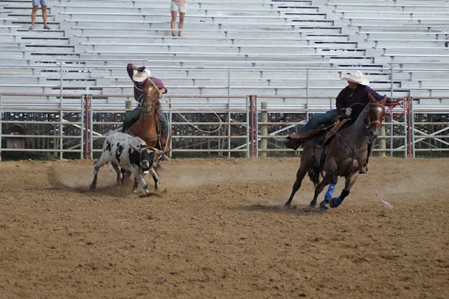 Team steer roping at the Sheridan Elk's Youth Rodeo
