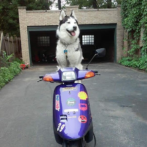 Attention Husky Owners