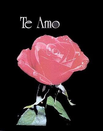 imágenes  te amo con una rosa