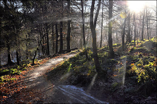Gambar hutan indah di scotlandia