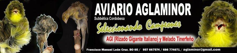 El Canario Rizado Gigante Italiano (AGI) / Melado Tinerfeño. AVIARIO AGLAMINOR