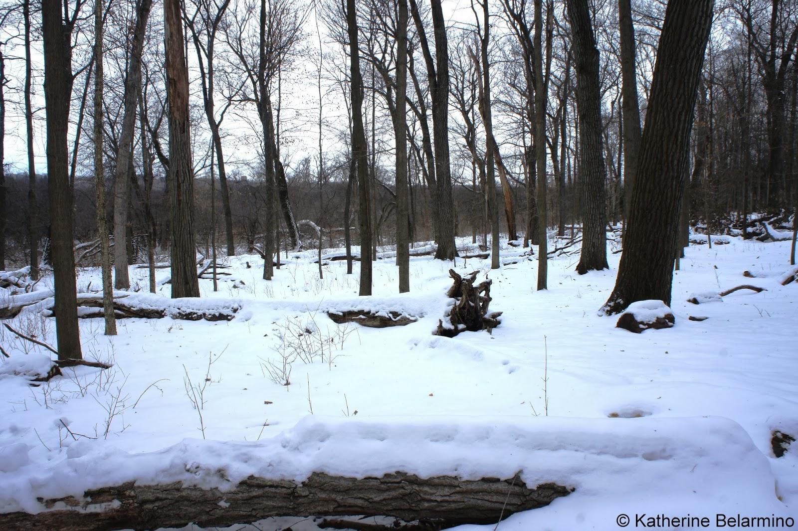 University of Wisconsin-Madison Arboretum