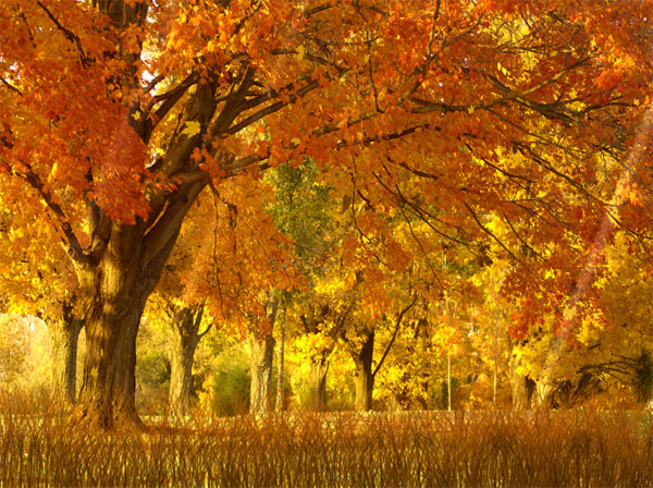 Autumn Xp Background7