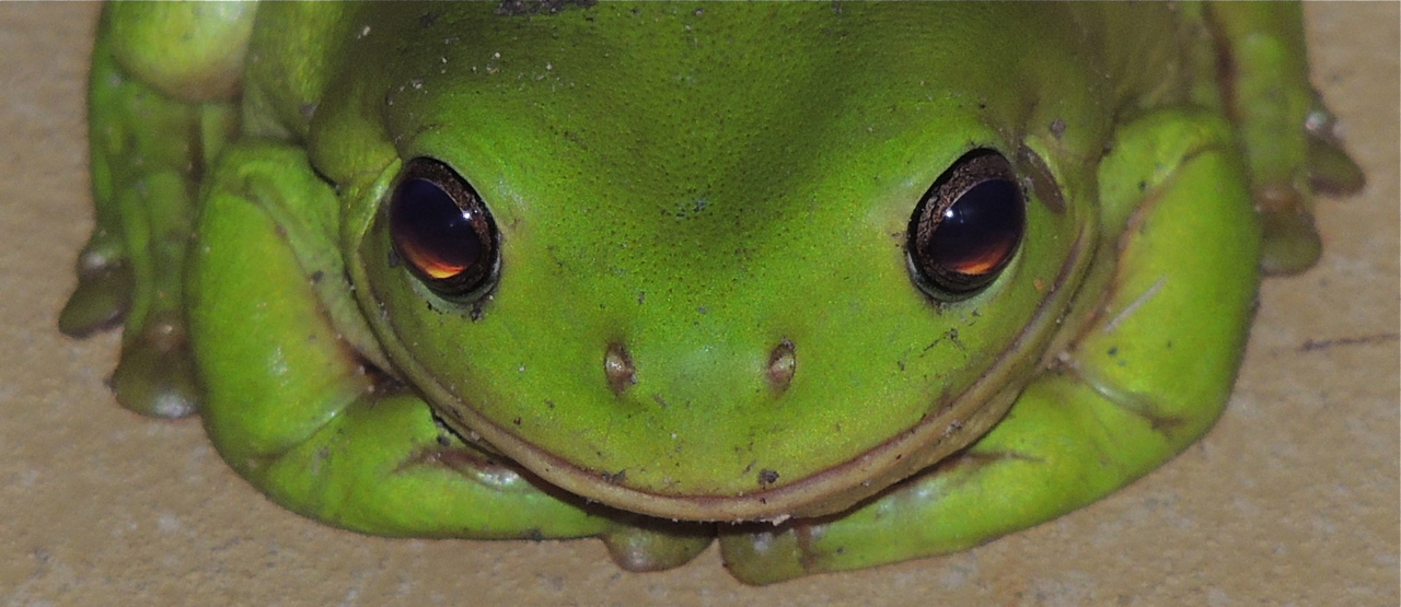 Smiley Frog | 1280 X 1024 | Download | Close | Chainimage