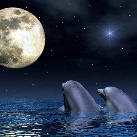 foto amor delfines