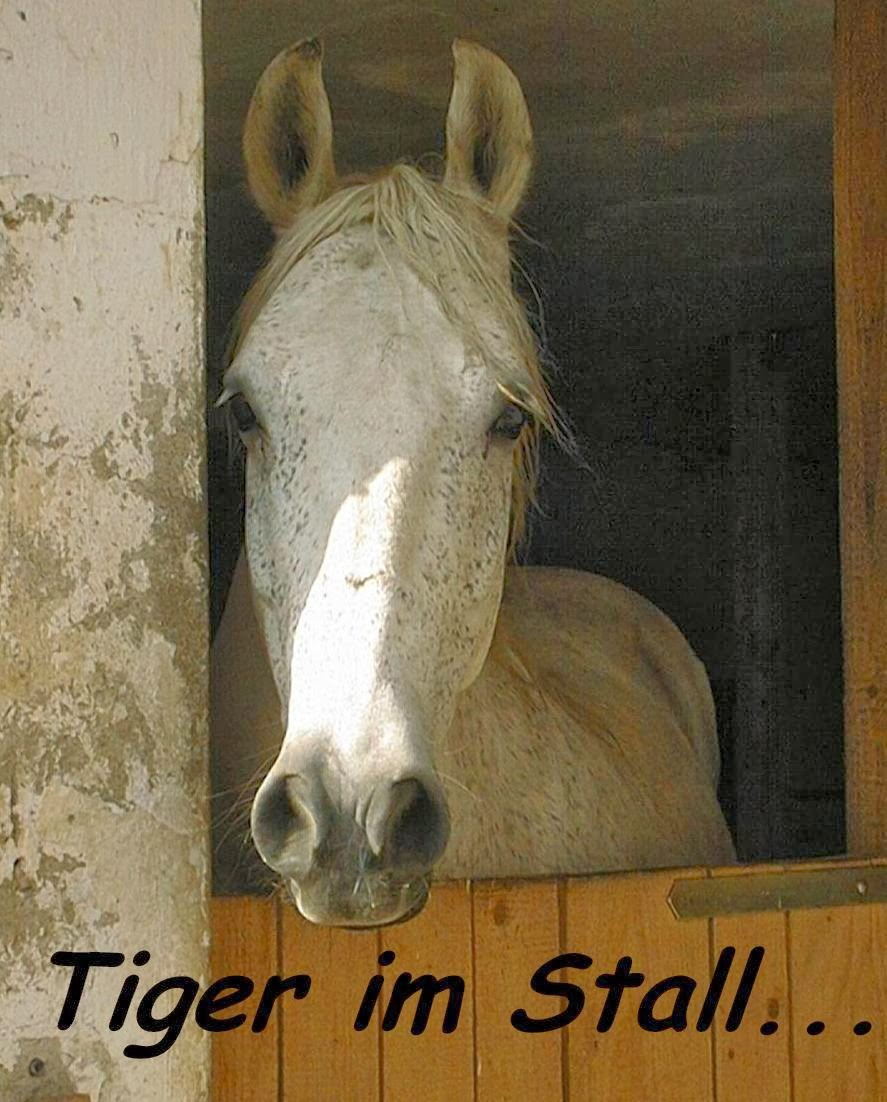 http://2.bp.blogspot.com/-AHhFNTcQDgg/UrHlQ7rkFkI/AAAAAAAAAsw/GGT39PnegIc/s1600/TigerStall.jpg