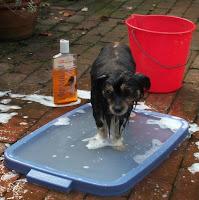 Mitzi having a bath